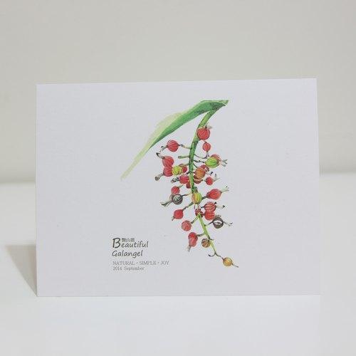 湘手绘 艳山姜 明信片