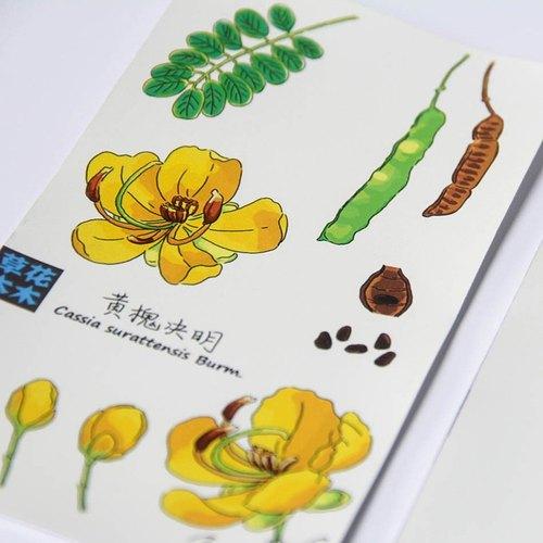 """【草花木木】原创水彩手绘花卉植物之""""黄槐决明""""明信片卡片套装"""