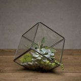 Prime Collection Terrarium 方塊迷你玻璃屋