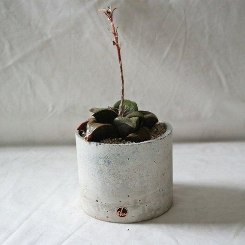 豆豆多肉植物与小杂货手工水泥盆-淡雅系列植栽