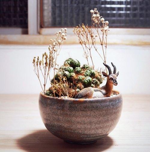 〈动植物的日光浴〉多肉植物