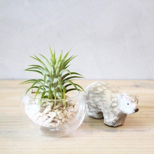 空氣鳳梨玻璃小植栽/擺飾/植物