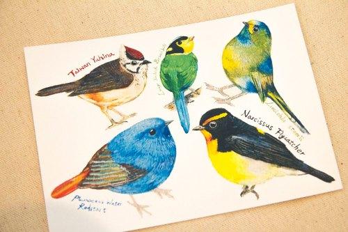 鸟 手绘 水彩 b 明信片