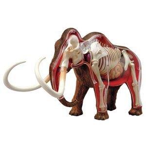 动物骨骼拼恐龙模型