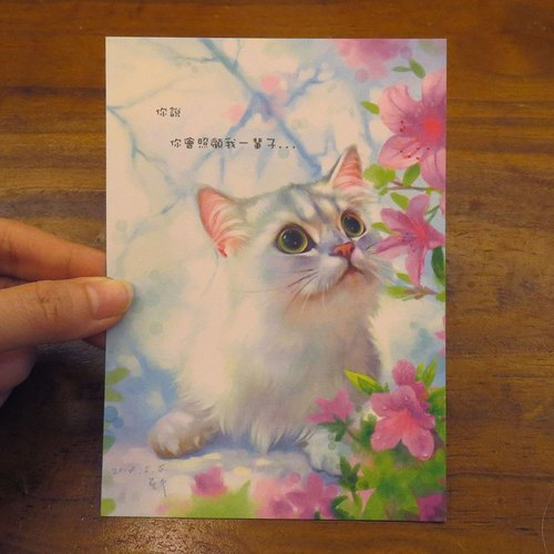 可愛貓咪療愈系金吉拉插畫明信片~嚕嚕
