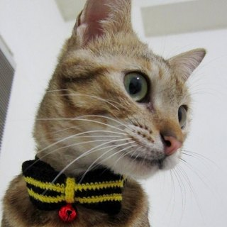 Yellow striped wool bow cat collar