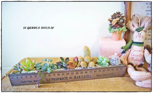 DIY wooden ruler succulents planted send (before the next one please designers associated oh)