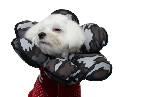 Petals Flowers pet anti-licking gray camouflage caps [] (are size 2 = S)**Taiwan's new patented design**
