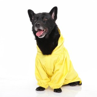 Paris dog rainbow ~ waterproof function waterproof Gore-Tex raincoat fabric SGS test grade nontoxic sunshine yellow
