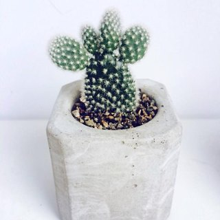 JokerMan / 0 - Home & office & indoor miniature forest & desk healing relieve pressure on small objects - geometric cube cement flower pot · Ornaments Succulents + [container]