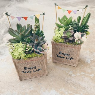 WARM enjoy the sun enjoy life succulents potted single sale new version
