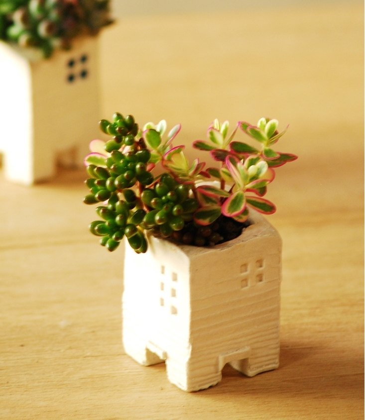 Mini House - Succulent Pottery White