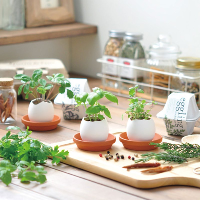 [Environmentally friendly packaging] Eco eggling plant cultivation eggs / flowers (two models)