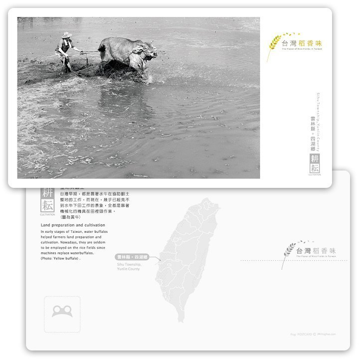 Taiwan rice fragrance postcard [hard series] - farming of cattle