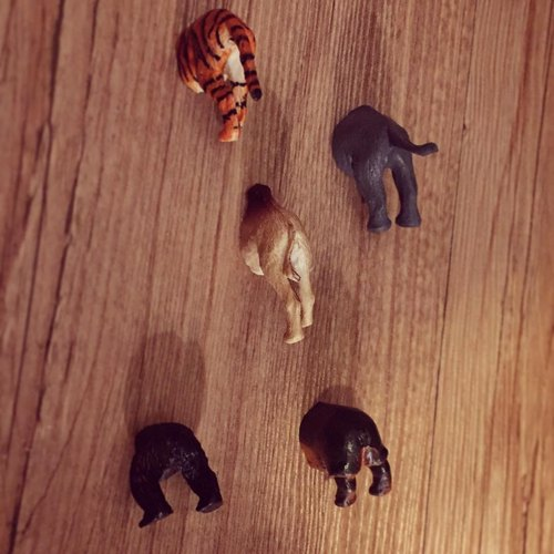 / Zoo / magnets elephant. Orangutans. Tiger. Hippo. Camel ass magnets