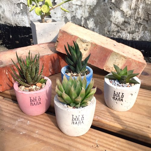 Day round lily Branch Succulents potted plants (including base) shade