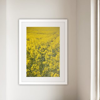 """Photo"" Rape Field II (excluding box / box available)"