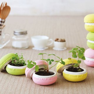 St. new pottery Macaron Potted plants