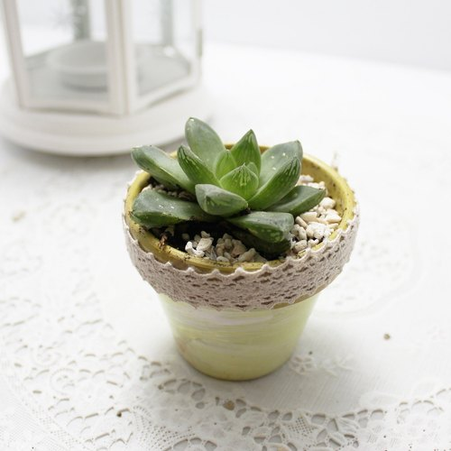 [Rabbit] love succulents smaller treatment plants, grass and painted treasure unglazed pots