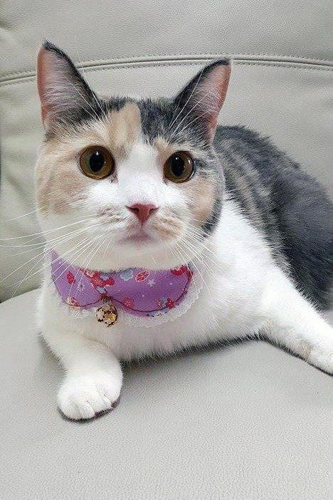Floral light purple bow tie cat dog pet collar neckband S size