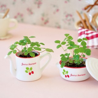 Saint new Tao Yun PETIT COCO pot - small strawberry