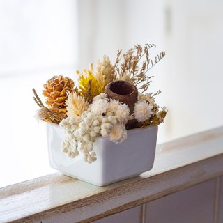 [Autumn] dry potted plants / / earth color / / display small things / /