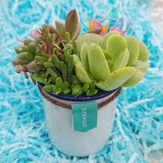 Mini multi-meat cups - plant pots + pots | potted gifts birthday graduation