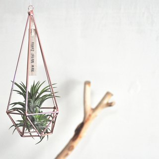 Air pineapple / floating ornaments / diamond / rose gold / medium