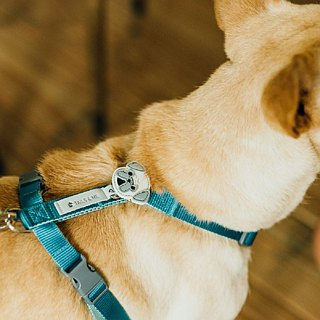 [Tail and me] exclusive accessories dog head series Bago
