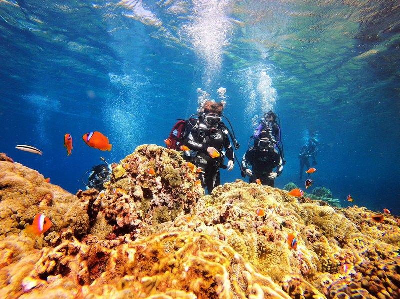 【台東蘭嶼】一對一體驗潛水