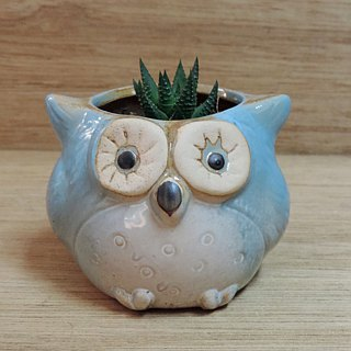 Succulent ‧ Owl Potted
