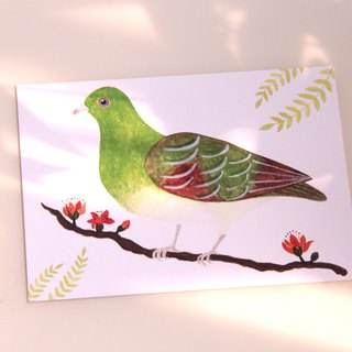 Green pigeon postcard Hong Kong wild bird postcard