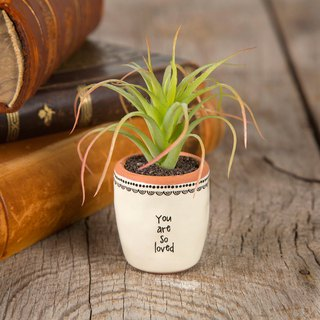 Hand-painted style mini potted plants - You are loved | PLNT001