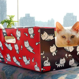 cat cat cat pet box box carton wild red