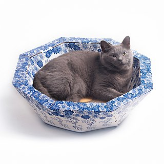 Blue and White China Bowl Cat Furniture_With Board