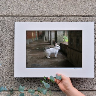 Limited rabbit photography art original - eternal stare