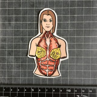 Anatomical female sticker