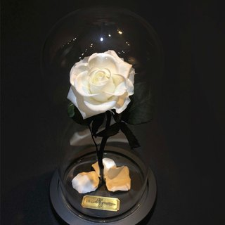 Valentine's Day eternal flower without flower - pure white M impression FloralDesign exclusive production