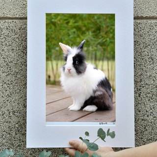 Limited rabbit photography art original - look