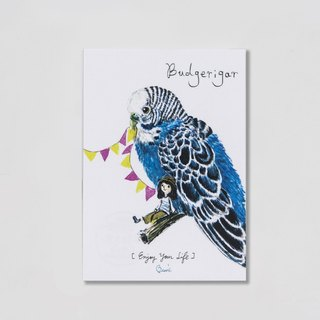 {BIRDER} Series -Budgerigar