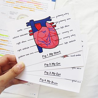 Lifelong Learning series: Organ Postcard Set (4pcs)