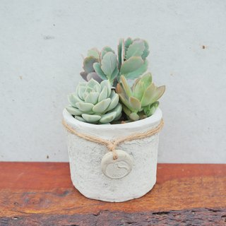 Beans Succulents and Small Groceries - Handmade Devonian Feelings Series - Old Tag Round Pot_ Succulents