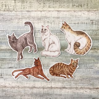 Color pencils hand drawn face cat waterproof sticker set 5 into