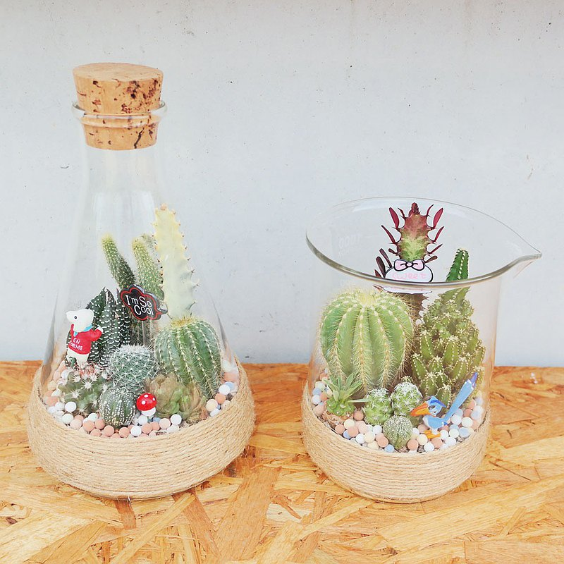 Peas succulents and small groceries-flask cactus planting combination 1000ML