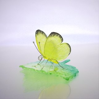 Glass butterfly Ghibel on leaf