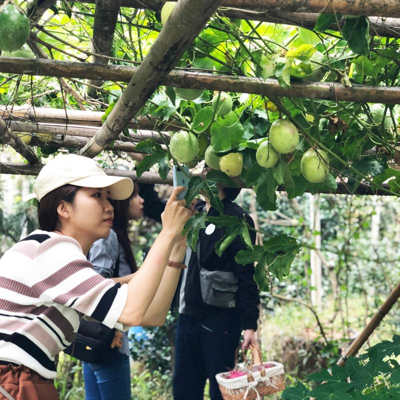【Workshops】June・Dashan Beiyue・Follow local small farmers to collect forests