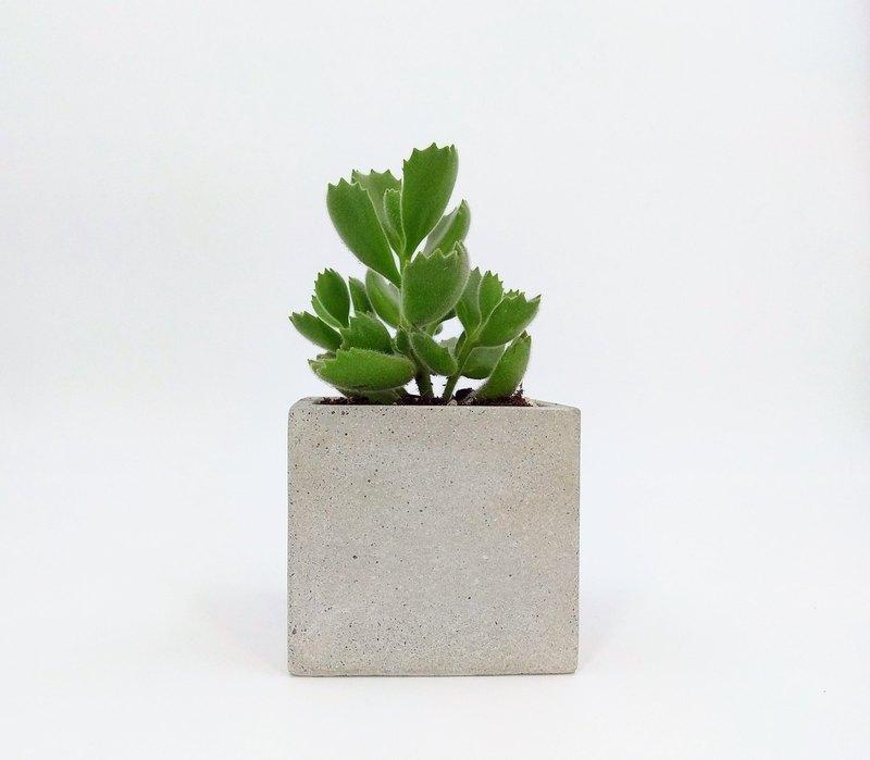 [Rectangular Basin] Cement Flower Pot / Cement Pot Plant / Cement Planting (Without Plants) - Designer HUI SE   Pinkoi