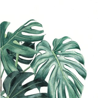 "Original Watercolour Painting (7.5"" x 5.5"") - Monstera"