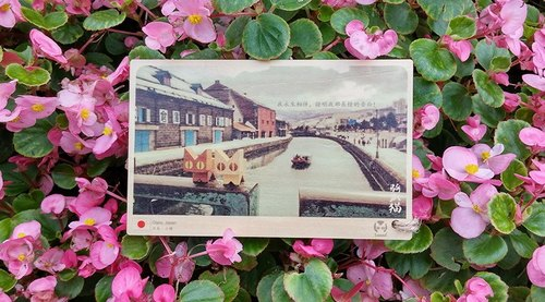 Lying cat riding wooden postcards - Japan Otaru