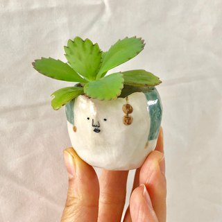 Small head potted plants - desk small plants